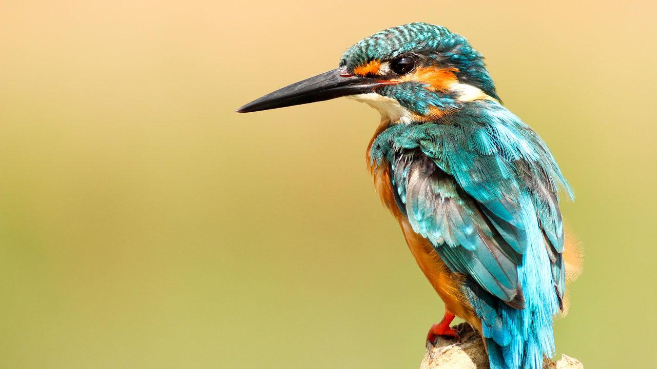 Bird Eden